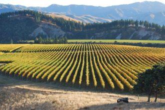 Vineyard lying below the hills.