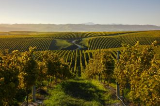 A Marlborough vineyard in sunset